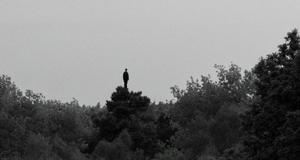 d-a-torre